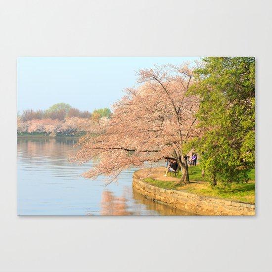 Cherry Blossoms - Photos Canvas Print