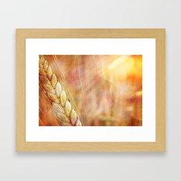 summer heat wheat Framed Art Print