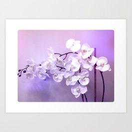 Orchids Covered In Violet Mist Art Print