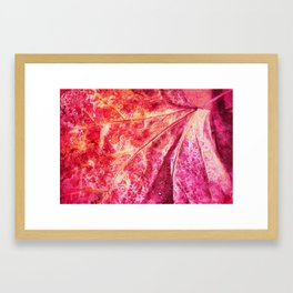 leaf and waterdrops Framed Art Print