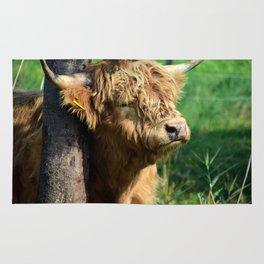 Galloway beef Rug