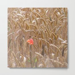 Poppy in a wheatfield Metal Print