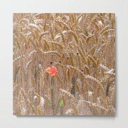 Poppy in a wheatfield Metal Print