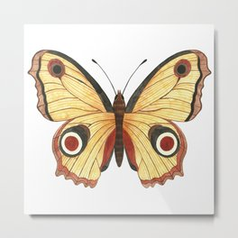 Juno Butterfly Illustration Metal Print