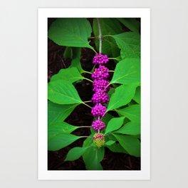 Purple Fruit Clusters Art Print