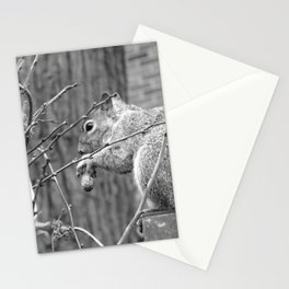 A Squirrel's Lunchbreak Stationery Cards