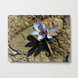 Wild Saffron Metal Print