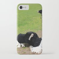 ostrich iPhone & iPod Cases featuring ostrich by Ezgi Kaya