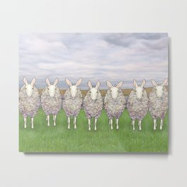 border leicesters in a line Metal Print