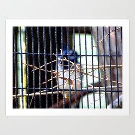 Jailbird  Art Print