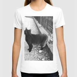 Observing Railway Cat Black & White T-shirt