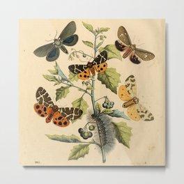5 Moths Metal Print