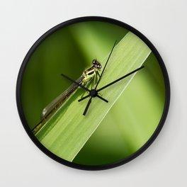 bugging around Wall Clock