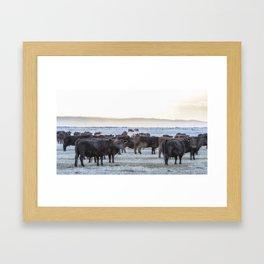 Good Morning Cows Framed Art Print