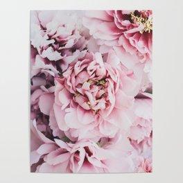 Pink Blush Peonies Poster