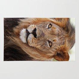 Big lion - Africa wildlife Rug