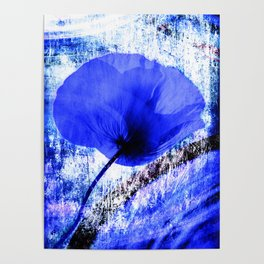 Blue Poppy vintage 222 Poster