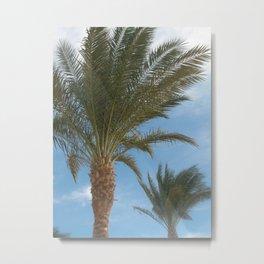 N.A. Palm 2 Metal Print