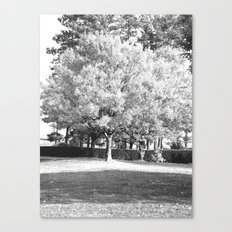 Rooted Canvas Print
