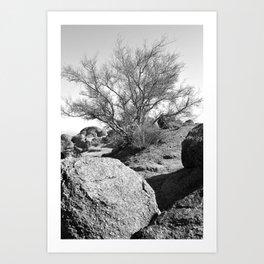 Arizona Mountain Top Tree Art Print