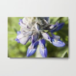 Lupine Flower Photography Print Metal Print