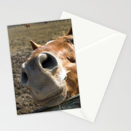Nosy Horse Farm / Domestic Animal Photograph Stationery Cards