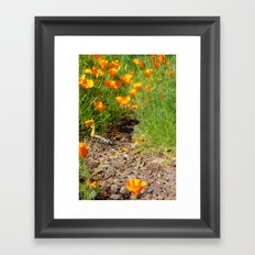 A Walk in the Poppies  Framed Art Print