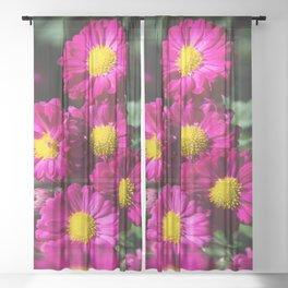 Pyrethrum Daisies Sheer Curtain