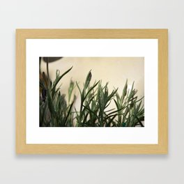 I hate lavender Framed Art Print