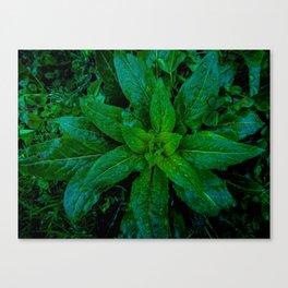 Vernal Verdure Canvas Print