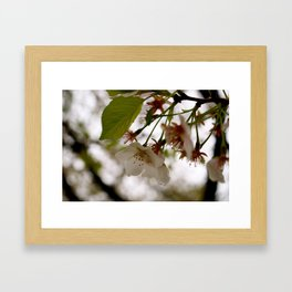 Pink in Spring Framed Art Print