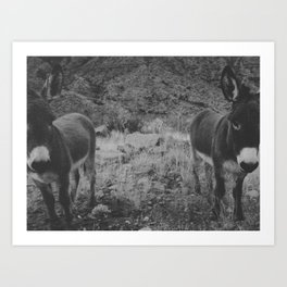 Black and White Burros Art Print