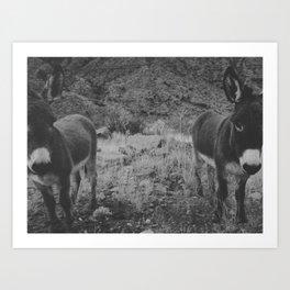 Black and White Burros Art Print