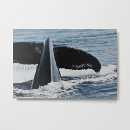 Whale Splash Metal Print