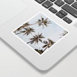 palm trees xiv / chiang mai, thailand Sticker