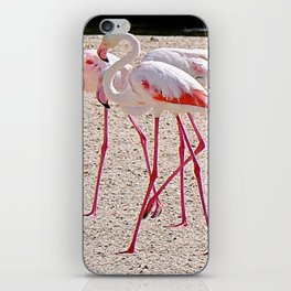 Dubai Flamingoes iPhone Skin