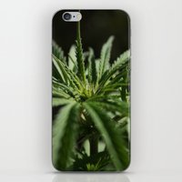 marijuana iPhone & iPod Skins featuring marijuana by andyskye