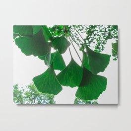 Ginkgo Leaves in Summer Metal Print