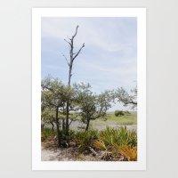 Marshland Tree Art Print