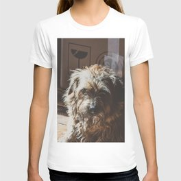 Dog by Jez Timms T-shirt