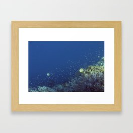 Small inhabitants of the Reef Framed Art Print