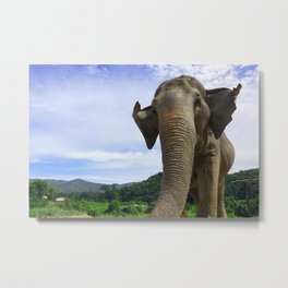 Elephant in Northern Thailand Metal Print