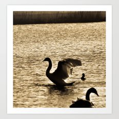 Stretching Swan Art Print