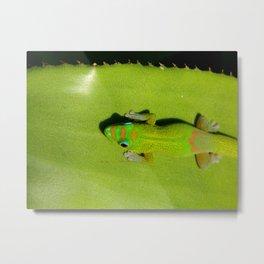 Geckos//Geckos//And More Geckos Metal Print