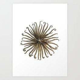 Feather Star Art Print