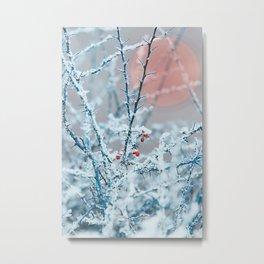 Snowy twigs and berries Metal Print