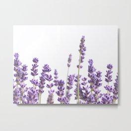 Purple Lavender #4 #decor #art #society6 Metal Print