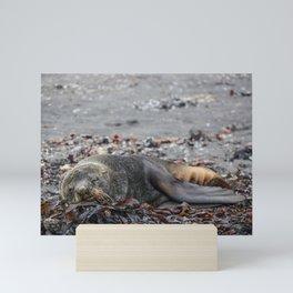 Sleepy seal resting on the shorelines of Antarctica Mini Art Print