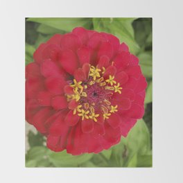 Red, RED Zinnia Throw Blanket