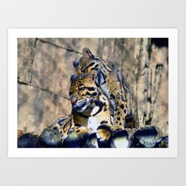 Clouded Leopards Grooming Art Print